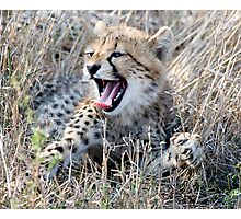 Yawn ! Photographic Print