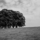 Trees on a Slope by KarenM