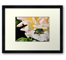June Beetle Framed Print