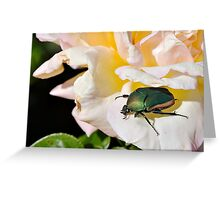 June Beetle Greeting Card