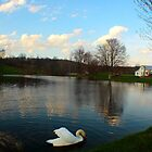 Swan Pond by Melissa Ann Blair