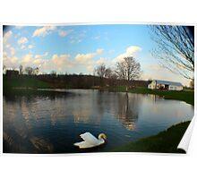 Swan Pond Poster