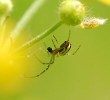 spider and his small world by davvi