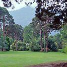 Tree Garden, Muckross House, Killarney, Ireland. by johnrf