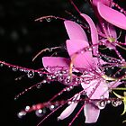 """Tears of Rememberance"" by Gail Jones"