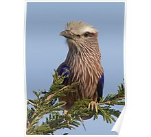 Purple Roller Poster