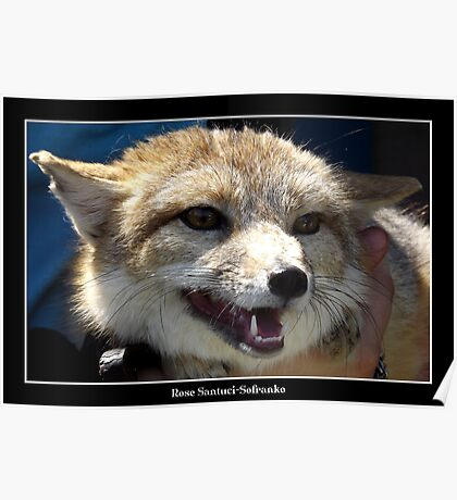 Swift Fox Poster
