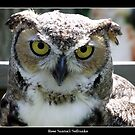 Great Horned Owl by Rose Santuci-Sofranko