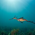 Weedy Seadragon by MattTworkowski