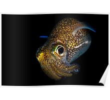 Bobtail Squid Poster