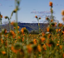 Upper Table Rock, Rogue Valley by Jamey Sanger