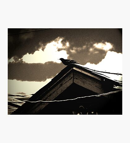 Bird on My Garage Photographic Print