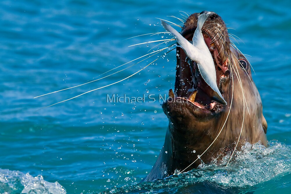 Swallow it Whole..Just for the Halibut! by Michael S Nolan