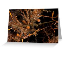 Wide Bodied Pipefish Greeting Card