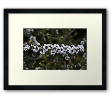 """ Even flys have good taste "" Framed Print"