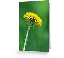 Single Dandelion Greeting Card