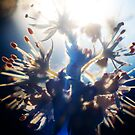 Hail the Sun by Zohar Lindenbaum