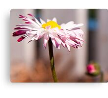 Pretty in pink! Canvas Print