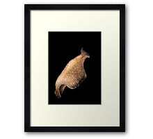 Swimming Flatworm Framed Print