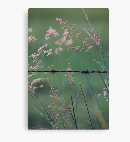 Weeds and Wire. Canvas Print