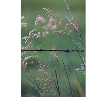 Weeds and Wire. Photographic Print