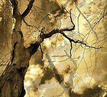 Trees 1 by AlyZen