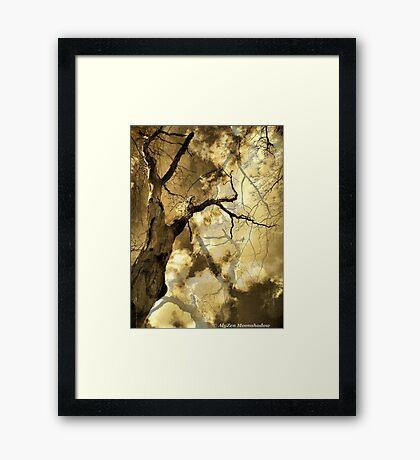 Trees 1 Framed Print