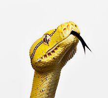 Australian Native Green Tree Python - Juvenile. by Ramzee86