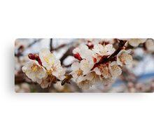 Plum Blossom... Oil paint effect! Canvas Print