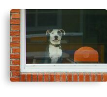 Doggie in the Window Canvas Print