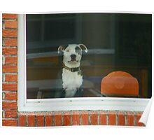 Doggie in the Window Poster