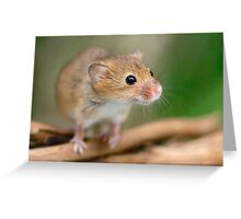 Happy Harvest Mouse Greeting Card