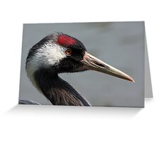 The not so Common Crane Greeting Card