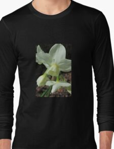 Creamy White and Lemon Daffodils Long Sleeve T-Shirt