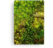 Ancient Hedgerow Canvas Print