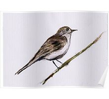 Watercolor Chiffchaff Poster