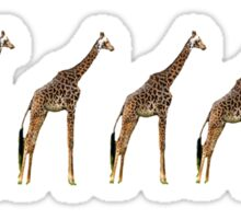 Giraffe Evolution Sticker