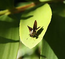 Insect baking in the warm sun light on beaufiful green leaves by noxas
