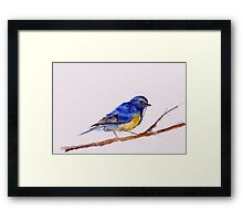 Watercolor blue tail Framed Print