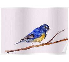 Watercolor blue tail Poster