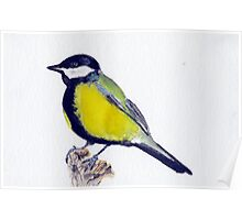 Watercolor great tit Poster