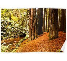 Red Woods - Otway's Victoria Poster