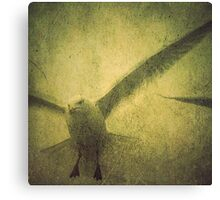 AVIAN FLEW Canvas Print