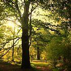 Sunlight Tree by ienemien