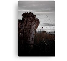 Country Spider Canvas Print