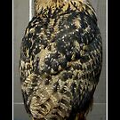 Eurasian Eagle-Owl by Rose Santuci-Sofranko