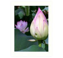 Lotus Bud Art Print