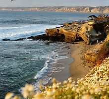 Pacific Coast - San Diego at La Jolla by erittenberg