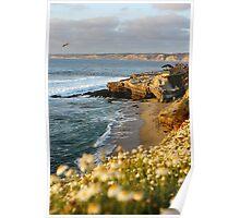 Pacific Coast - San Diego at La Jolla Poster