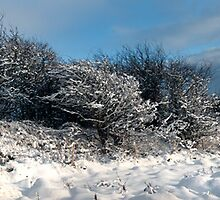 Snow scene by Paul Tremble